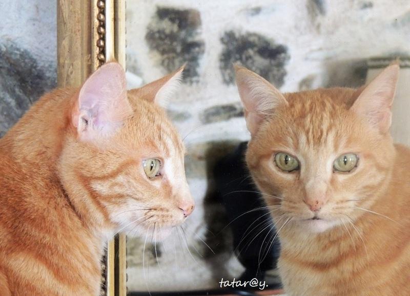 Miroir....
