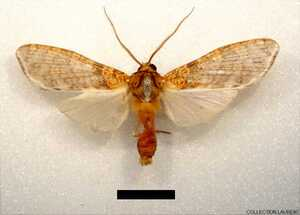 Graphaea