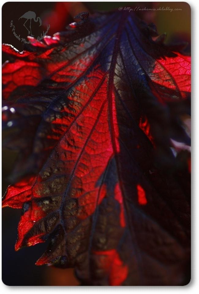 Rouge entre ombres et lumières...