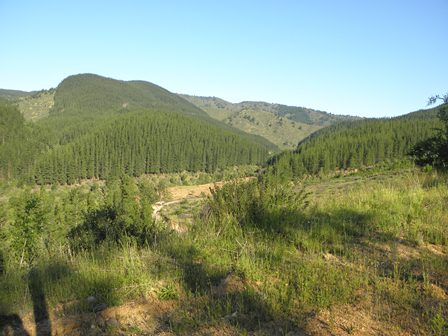 Talca > vallée Las Trancas Chillan