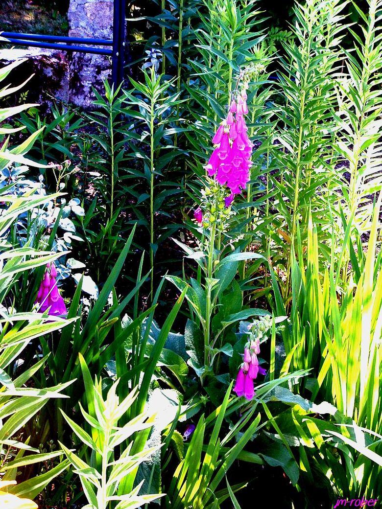 Jardin: Fleurs d'été, quand les mélanges rentrent en scène