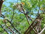 Rincon de la vieja joli oiseau