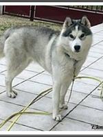 Okami (15 mois)