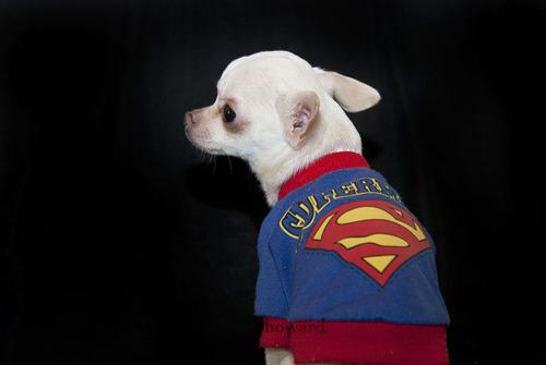 Kitrio : Mon nécessaire vétérinaire