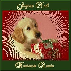 chien cadeau joyeux noel et bonne année