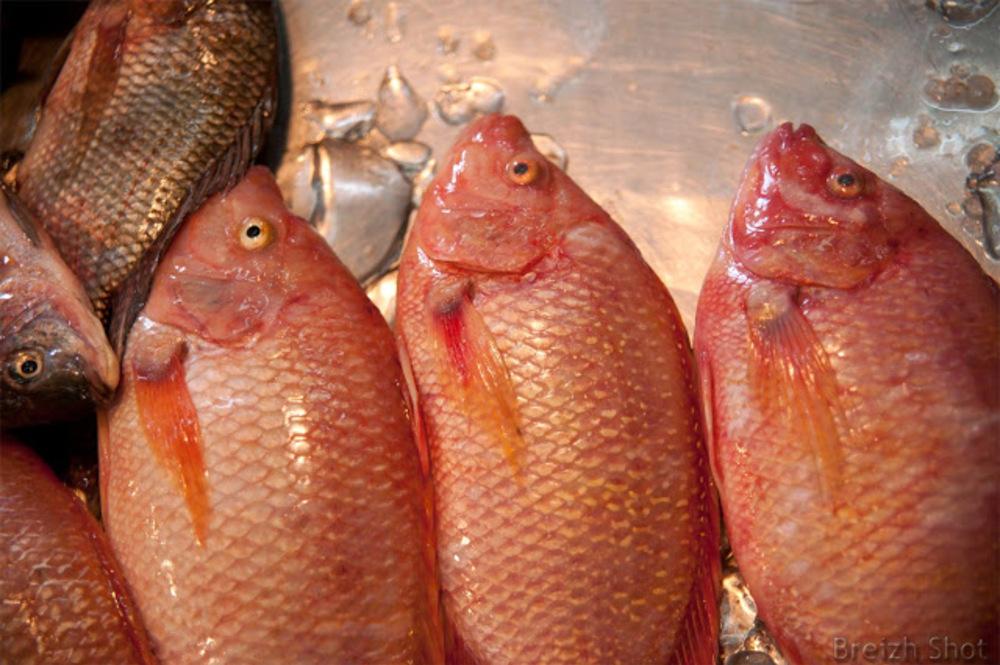 Marché Pak Klong Talat  Bangkok :  Les poissons du golfe de Siam