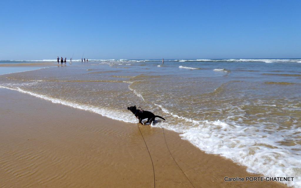 * Titou à la plage, quel bonheur!*