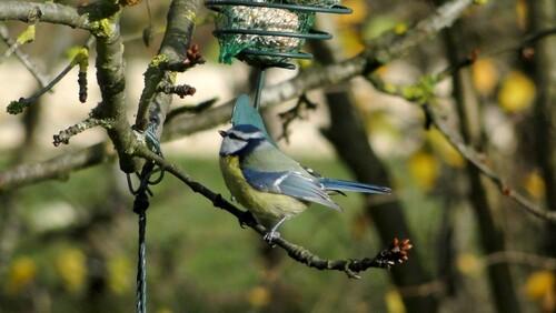 -Oiseaux de mon jardin