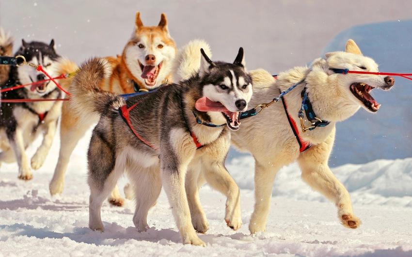 10 Images de chiens