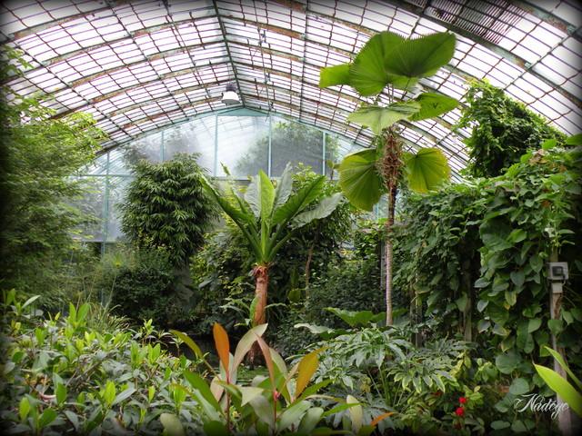Blog de dimitria : De la diversité en toute simplicité...., En passant par le jardin des poètes sous la pluie ...