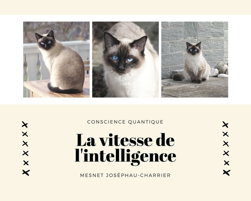 La vitesse de l'intelligence