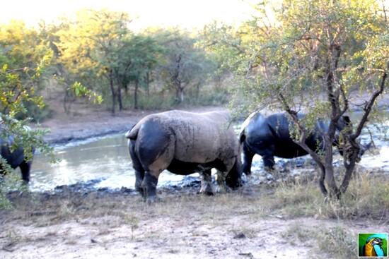 Afrique du Sud : juin 2018: Du pur bonheur dans la savane 2/2