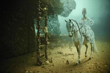 Scène de vie dans une épave immergée ...
