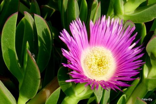 Une jolie fleur !