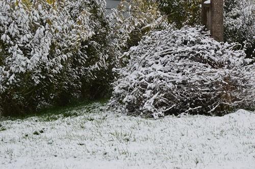 neige1103131.jpg