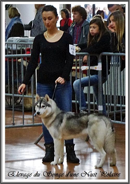 Exposition canine de Castres (18 octobre 2015)