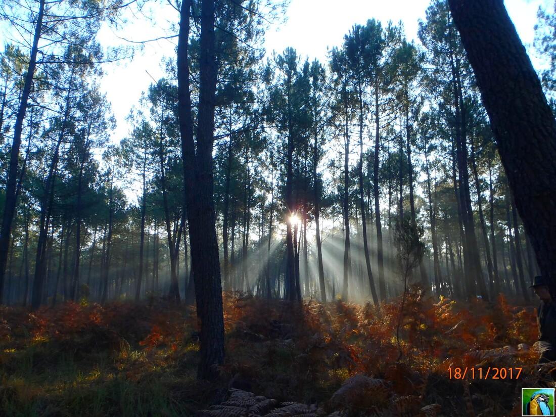 Rayon de soleil : Superbe nature