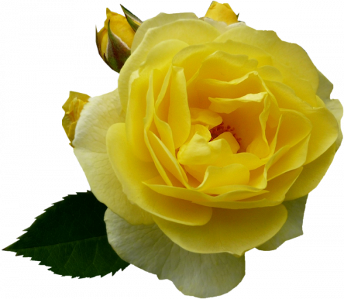 Tubes fleurs, tubes roses