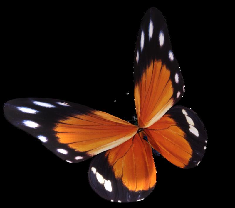 Tube de papillon orange (image-render)