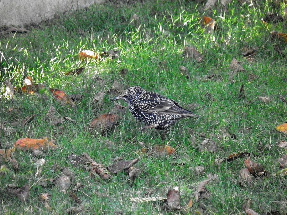Les ptits oiseaux aiment ma pelouse