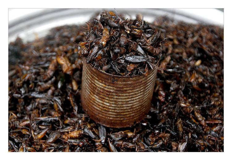 La fete des insectes
