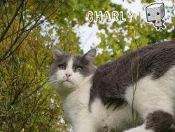 La présentation de mon chat =^^=