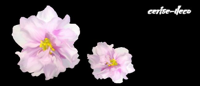 design tout doux : symphonie en rose