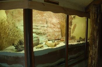 Zoo Osnabruck d50 2012 153