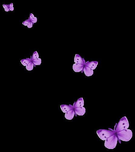 Papillons Série 5