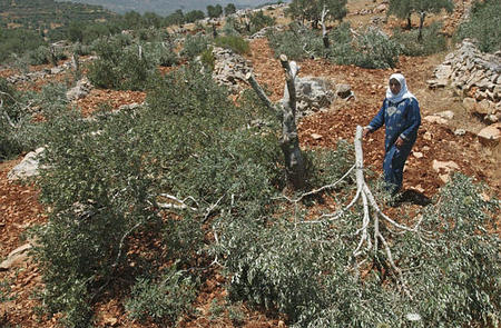 Considérations diverses : sur la question du boycott des produits israéliens (BDS)