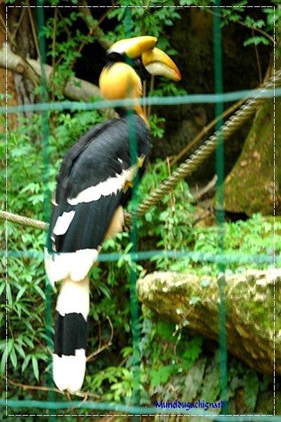 Zoo-Douai 0860