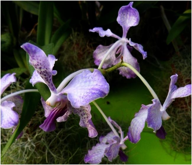 Passion Orchidées a Nantes