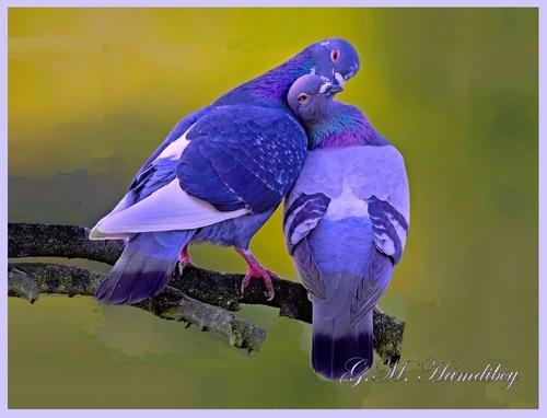 « Les pigeons, c'est mignon ! »