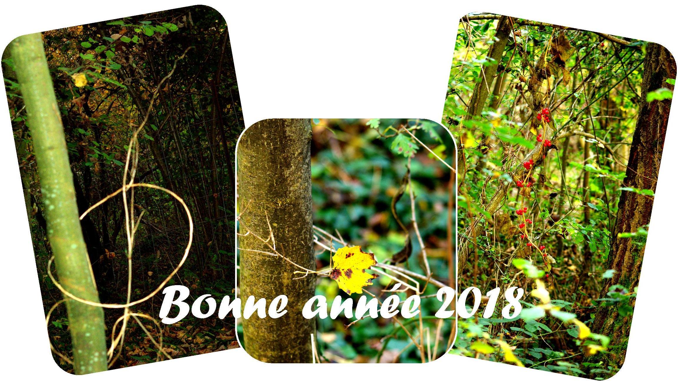 Bonne et heureuse année 2018 dans Ce blog - son auteur voeux-2018