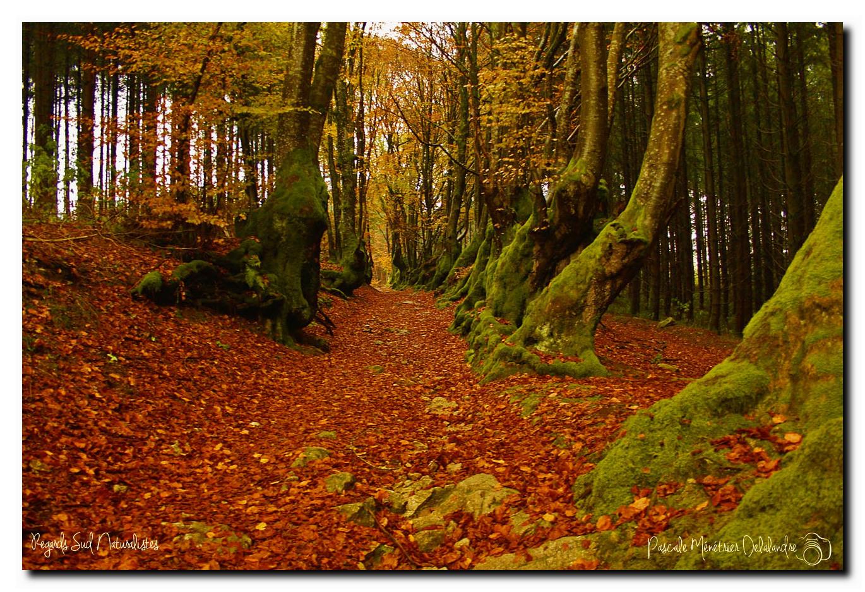 L'Allée des Géants (ou Le chemin des sorcières)