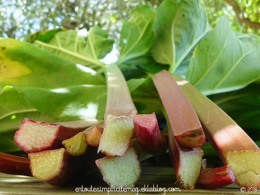 La rhubarbe : culture et récolte