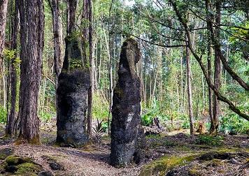 Les arbres de lave de Hawaï ...