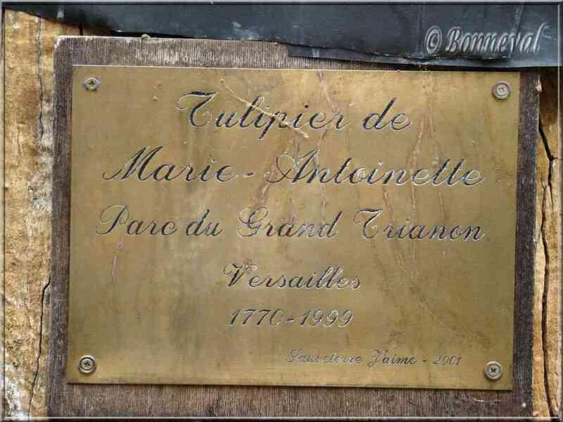 Sauveterre-de-Rouergue Aveyron souche du tulipier de Marie-Antoinette
