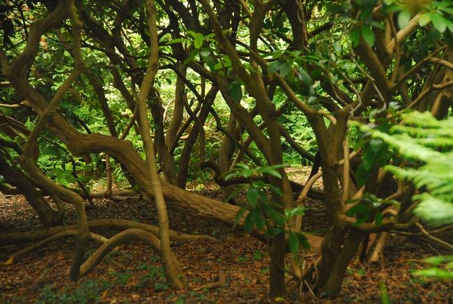 Le Bois des Moutiers à Varengeville.