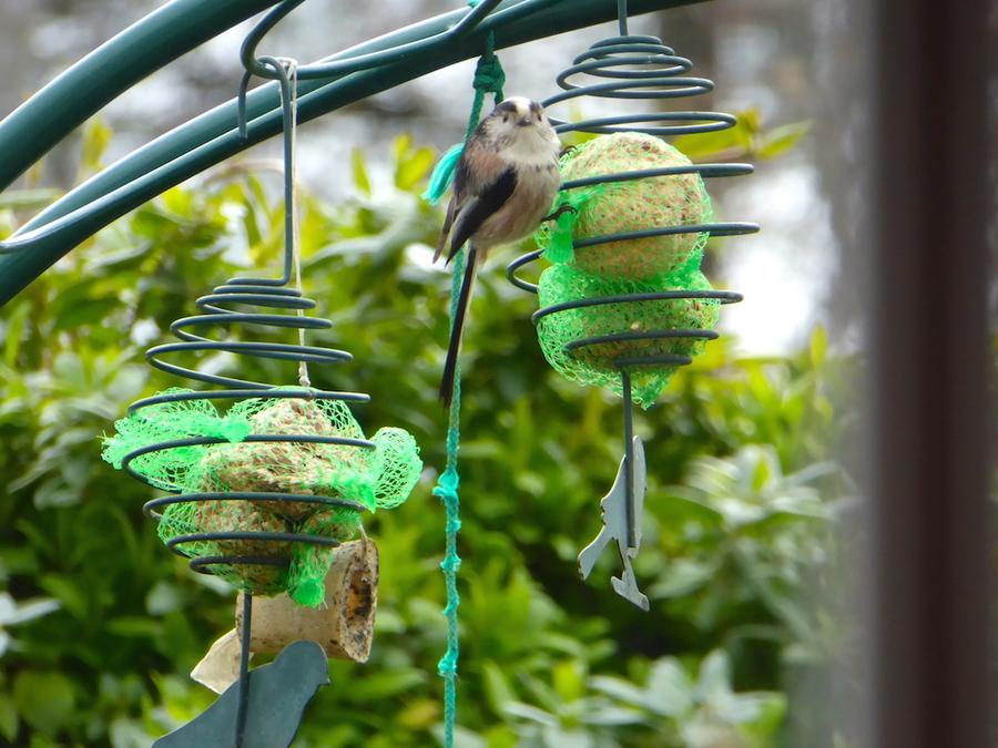 Mes oiseaux: petite pause sur deux jours pour rattraper mon retard!