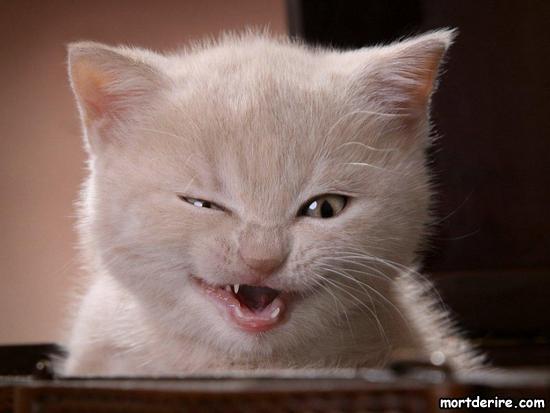 """Résultat de recherche d'images pour """"chat affamé"""""""