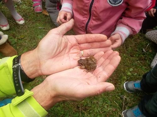 A la recherche d'insectes