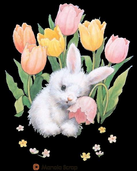 Pâques page 9 - lapins blanc