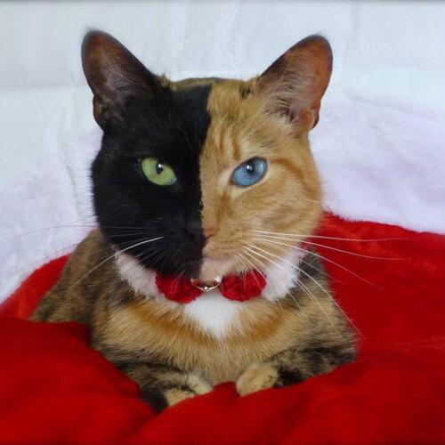 Des chats uniques et bluffants