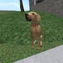 Un chien a lunette