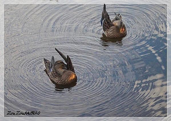 PROMENADE-FLEURIE--09-OCTOBRE-2012-N--2--.jpg
