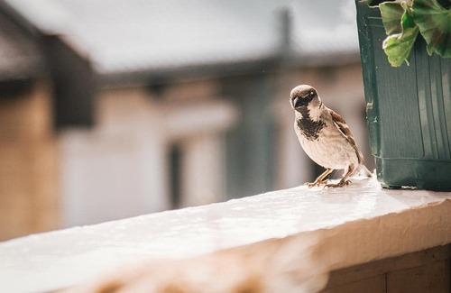 Comment nourrir les oiseaux de son jardin