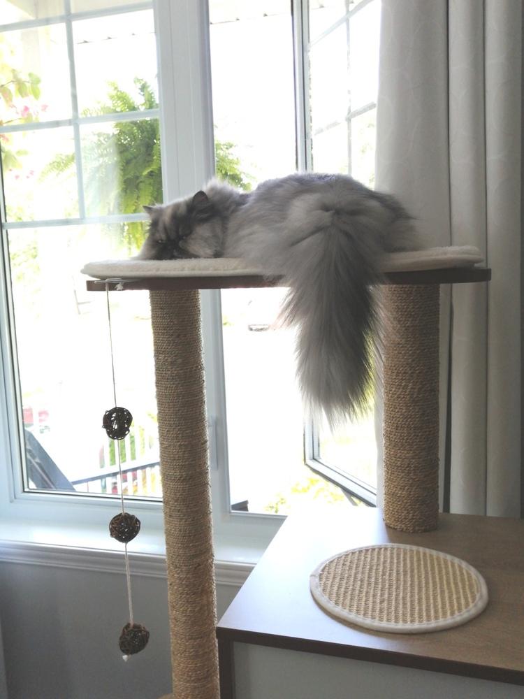 Choupette a eu deux ans le 15 septembre