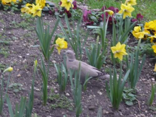 oiseaux-jardin-08.JPG