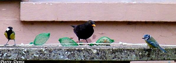 Resto oiseaux
